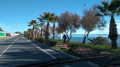 Palmen am Straßenrand
